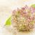 ピンク · 咲く · マクロ · クローズアップ · ショット - ストックフォト © haraldmuc