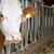 赤ちゃん · 牛 · 頭 · 詳細 · 小 - ストックフォト © haraldmuc