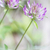 vermelho · erva · daninha · flor · blue · sky · jardim · verão - foto stock © haraldmuc