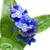 мне · не · цветок · сердце · фон - Сток-фото © haraldmuc