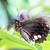 tropical butterfly parides iphidamas stock photo © haraldmuc