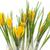 paars · Geel · krokus · tuin · bloem · blad - stockfoto © haraldmuc