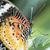 borboleta · retrato · floresta · folha · jardim · verão - foto stock © haraldmuc
