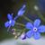 engem · nem · virág · makró · közelkép · kék - stock fotó © haraldmuc