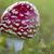 vliegen · vruchten · lichaam · buiten · weide · bos - stockfoto © haraldmuc