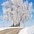 huş · ağacı · kapalı · ağaçlar · kış · manzara · gökyüzü - stok fotoğraf © haraldmuc