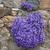 çiçekler · mavi · saksı · güzellik · buket · dekorasyon - stok fotoğraf © haraldmuc