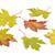 outono · bordo · folhas · branco · árvore · natureza - foto stock © haraldmuc