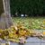 осень · лист · тротуаре · темно · текстуры · город - Сток-фото © haraldmuc
