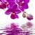rózsaszín · orchidea · izolált · fehér - stock fotó © haraldmuc