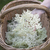 hand holding elderflower over a basket stock photo © haraldmuc