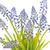 primer · plano · flores · flor · textura · verano · verde - foto stock © haraldmuc