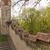 исторический · кладбище · средневековых · город · свет · крест - Сток-фото © haraldmuc