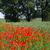kavicsút · búzamező · Németország · fű · nap · természet - stock fotó © haraldmuc