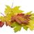 najaar · esdoorn · bladeren · witte · boom · natuur - stockfoto © haraldmuc