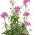 roxo · flores · pote · isolado · branco - foto stock © haraldmuc