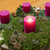 advent wreath with one burning candle stock photo © haraldmuc
