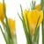 roxo · amarelo · açafrão · jardim · flor · folha - foto stock © haraldmuc