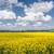 arany · mező · kék · ég · kilátás · virág · fa - stock fotó © haraldmuc
