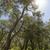 árboles · secar · amarillo · hierba · cielo · azul - foto stock © haraldmuc