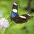 sara longwing heliconius sara stock photo © haraldmuc