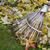 outono · grama · natureza · folhas · gramado - foto stock © haraldmuc