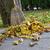 outono · terraço · grama · laranja · folhas - foto stock © haraldmuc