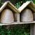 mel · de · abelha · família · comida · verão - foto stock © haraldmuc