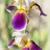 Iris · лист · природы · свет · зеленый - Сток-фото © haraldmuc