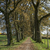 деревья · закат · Германия · небе · природы · области - Сток-фото © haraldmuc