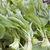 чеснока · лес · дерево · весны · кровать - Сток-фото © haraldmuc