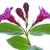 pink flowers weigela isolated on white stock photo © haraldmuc