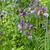 viola · Iris · primo · piano · macro · shot · fiore - foto d'archivio © haraldmuc