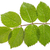 hoja · aumentó · gotas · de · agua · primer · plano · naturaleza · fondo - foto stock © haraldmuc