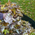 outono · mão · natureza · folhas - foto stock © haraldmuc