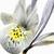 Iris · солнце · лет · день · цветок - Сток-фото © haraldmuc