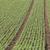 giovani · piantine · agricola · campo · primavera - foto d'archivio © haraldmuc