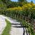 желтый · лист · забор · лес · природы - Сток-фото © haraldmuc