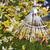 outono · grama · natureza · folha · pé - foto stock © haraldmuc