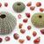 three sea urchin shells surrounded by tiny sea snails stock photo © haraldmuc