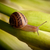 caracol · verde · jardim · planta · natureza · folha - foto stock © hayaship