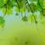 生態学 · バブル · 緑の葉 · 実例 · 春 · デザイン - ストックフォト © helenstock