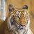 猫 · 顔 · クローズアップ · 表示 · 猫 - ストックフォト © hin255