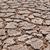 dry earth stock photo © hinnamsaisuy