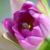 arı · nektar · çiçek · mor - stok fotoğraf © hinnamsaisuy