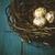 madárfészek · tojások · fű · magas · égbolt · tavasz - stock fotó © hitdelight