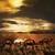 kamelen · woestijn · twee · kameel · naar · zon - stockfoto © hitdelight