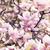 красивой · старые · дерево · весны · саду · пейзаж - Сток-фото © hitdelight