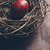 grunge · kuş · yumurta · yuva · Paskalya · doğal - stok fotoğraf © hitdelight