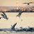 mérföldek · vadászat · Vörös-tenger · víz · hal · természet - stock fotó © hitdelight